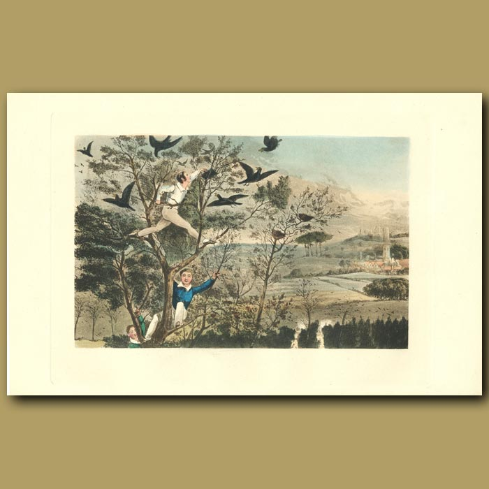 Antique print. Who-Whoop! I've Done It!: Collecting Jackdaw Eggs
