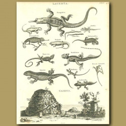 Reptiles Gecko, Salamader,Chameleon, Iguana etc