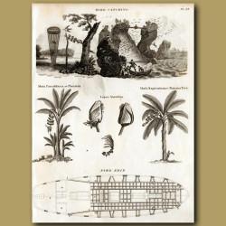 Bird Catching, Banana trees, Mussels