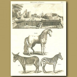 Observatory at Benares in India; horse, ass and zebra