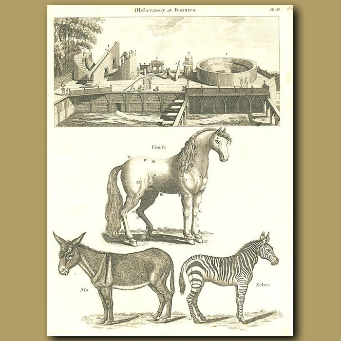 Antique print. Observatory at Benares in India; horse, ass and zebra