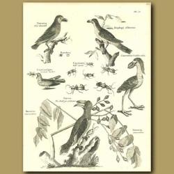 Birds: Pied Hornbill, Barbet, Goat Sucker Etc.