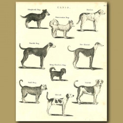 Dogs: Shepherd, Pomeranian, Greyhound, King Charles, Mastiff etc.