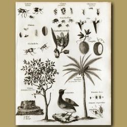 Beetles, Citrus Forbidden Fruit Tree, Coconut Palm