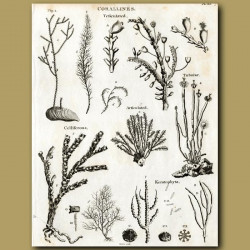 Different types of soft corals