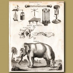 Electricity and Elephant