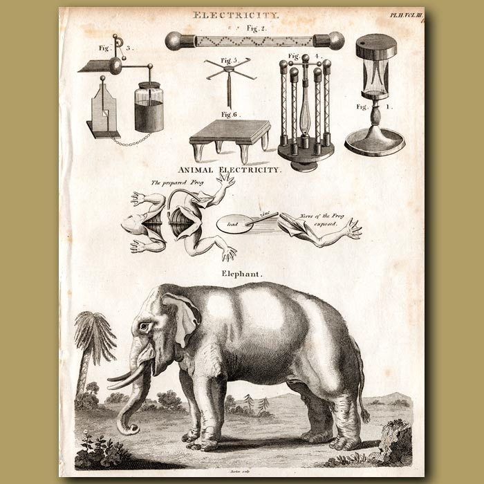 Antique print. Electricity and Elephant