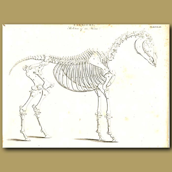 Antique print. Farriery: Skeleton of the horse etc.