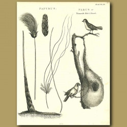 Weaver Birds And Nest