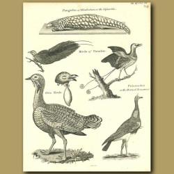 Birds: Great Bustard, Birds Of Paradise Etc.