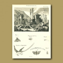 Persepolis And Tropic Bird And Butterflies