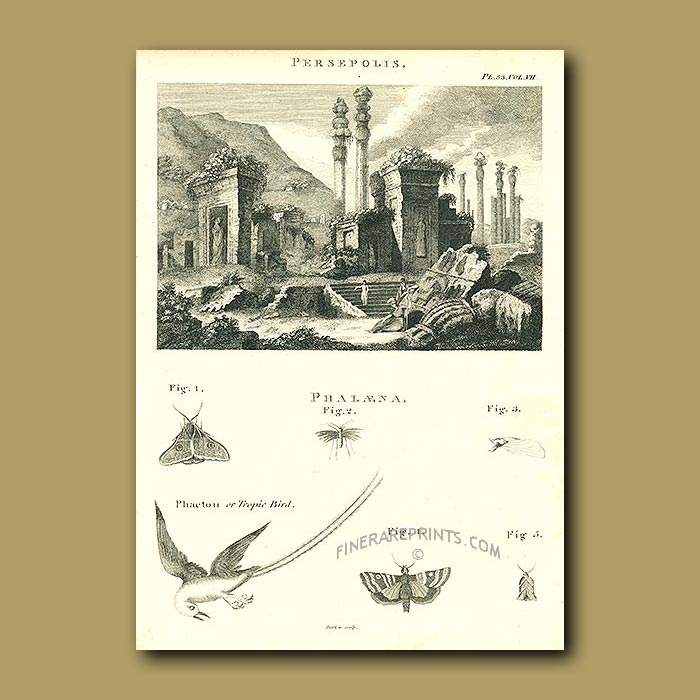 Antique print. Persepolis And Tropic Bird And Butterflies