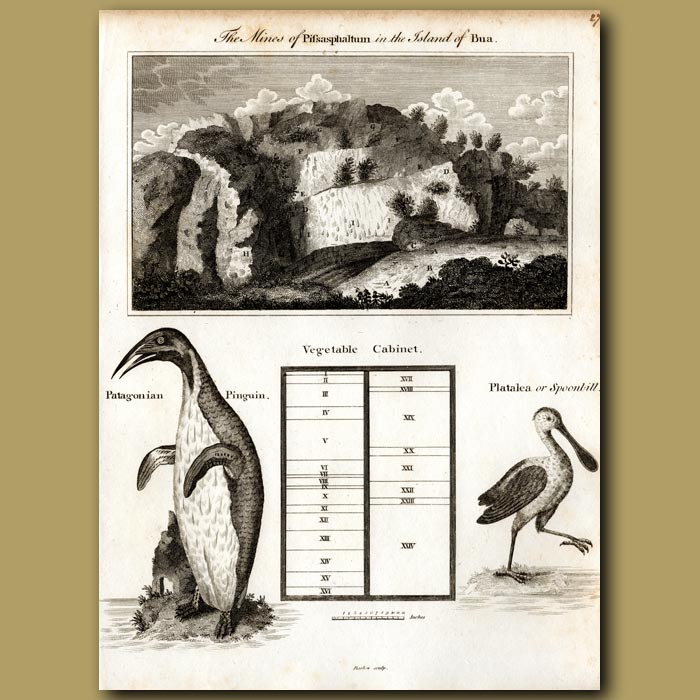 Antique print. Mines on the island of Bua, Patagonian Penguin and Spoonbill
