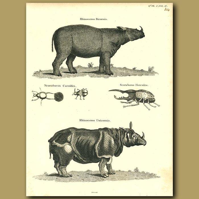 Antique print. Rhinoceros