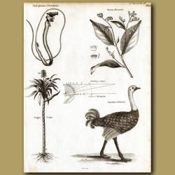 Deep Sea Tube-Eye Fish, Sugar Cane And Ostrich