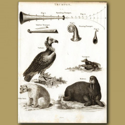 Vulture, Vampire Bat, White Bear And Walrus