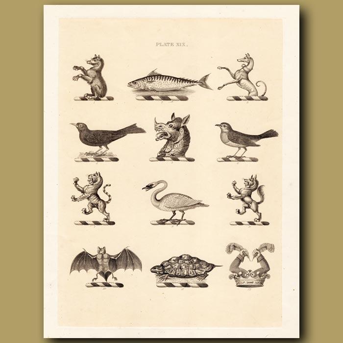 Antique print. Heraldry 19: Bear, Turtle, Greyhound etc