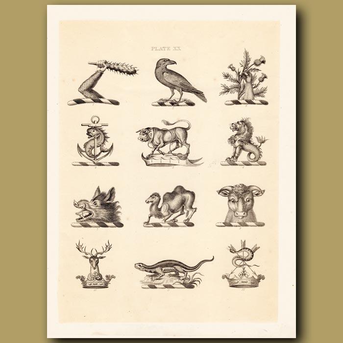 Antique print. Heraldry 20: Merlion, Camel, Lizard etc