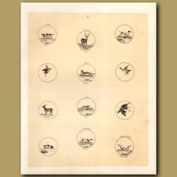 Foxhound, Deer, Fox, Duck, Rabbit,Grouse