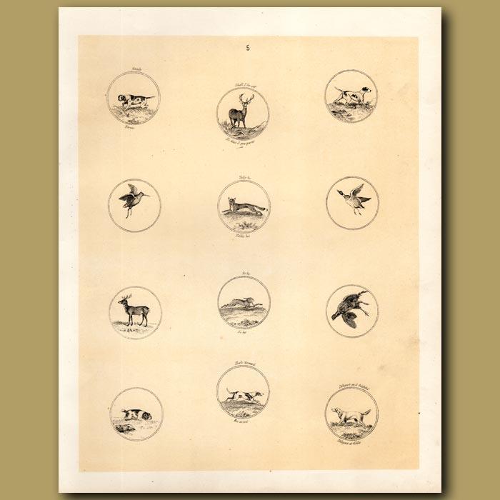 Antique print. Foxhound, Deer, Fox, Duck, Rabbit,Grouse
