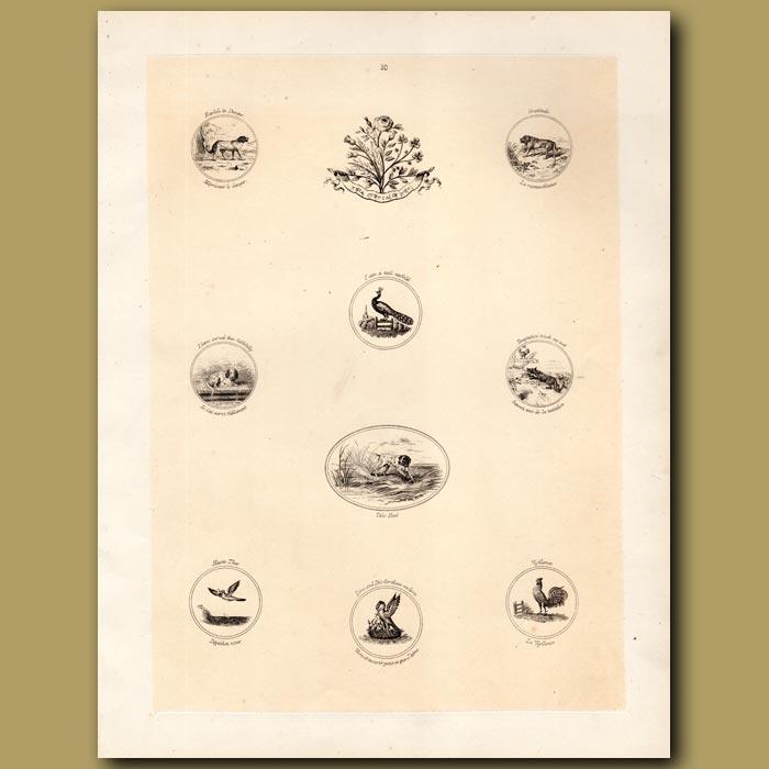 Antique print. Dogs, Peacock, Cockerel