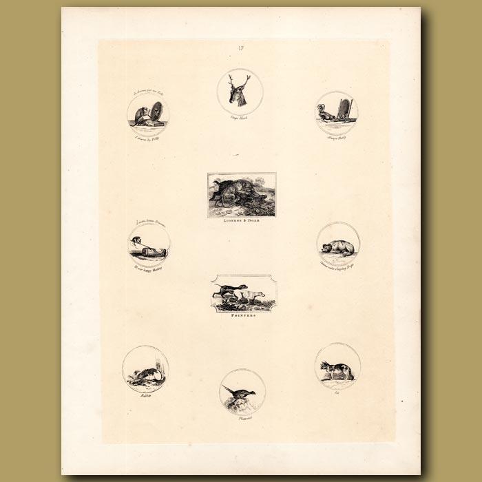 Antique print. Monkey, Stag, Cockerel, Pointer Dogs, Rabbit, Pheasant, Cat