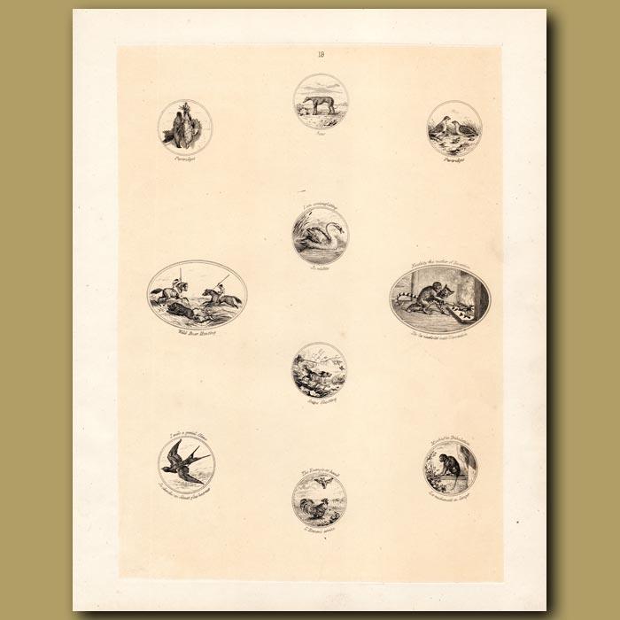 Antique print. Partridges, Greyhound, Swan, Boar Hunting, Monkey