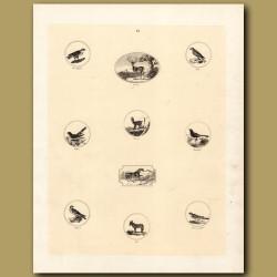 Goshawk, Stag, Kite, Cuckoo, Chamois, Blackbird, Falcon, Ass, Sparrowhawk