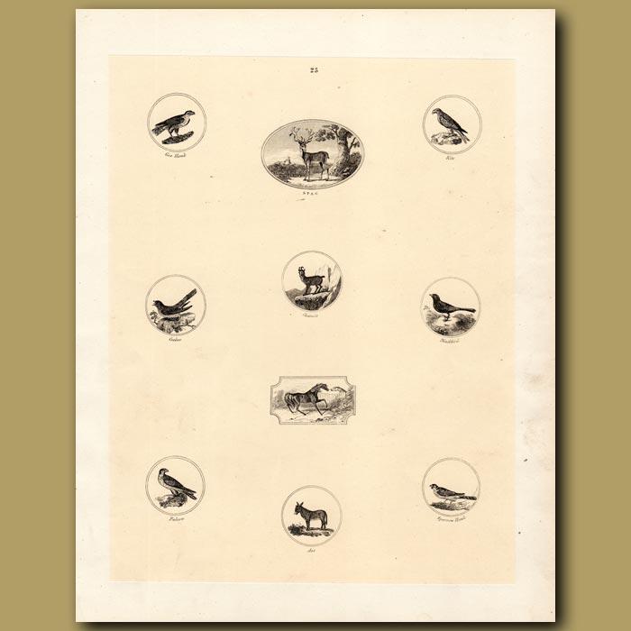 Antique print. Goshawk, Stag, Kite, Cuckoo, Chamois, Blackbird, Falcon, Ass, Sparrowhawk