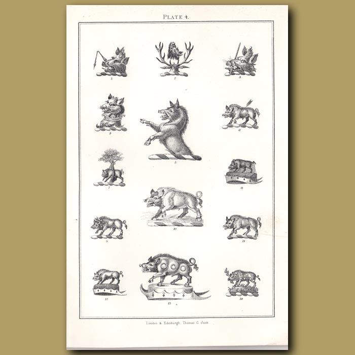 Boars: Genuine antique print for sale.