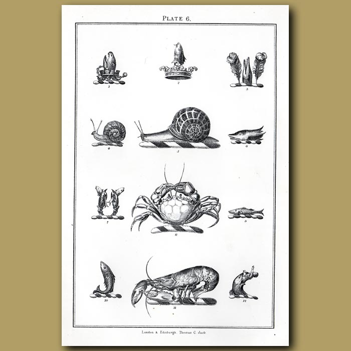 Snail, crab and lobster: Genuine antique print for sale.