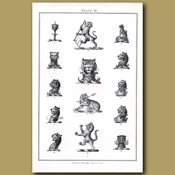 Leopard and Tiger: Genuine antique print for sale.