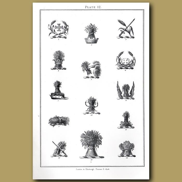 Wheat: Genuine antique print for sale.