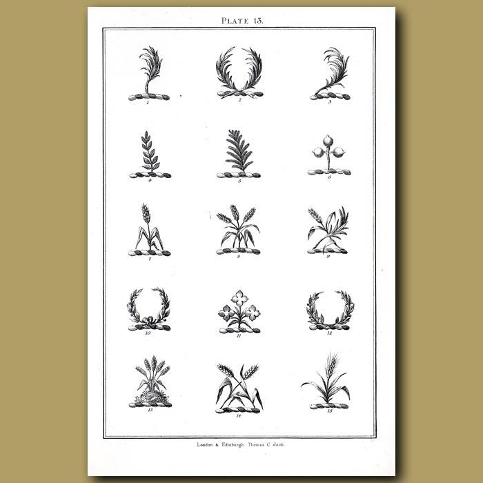 Palm branch, Pine branch,Laurel garland: Genuine antique print for sale.