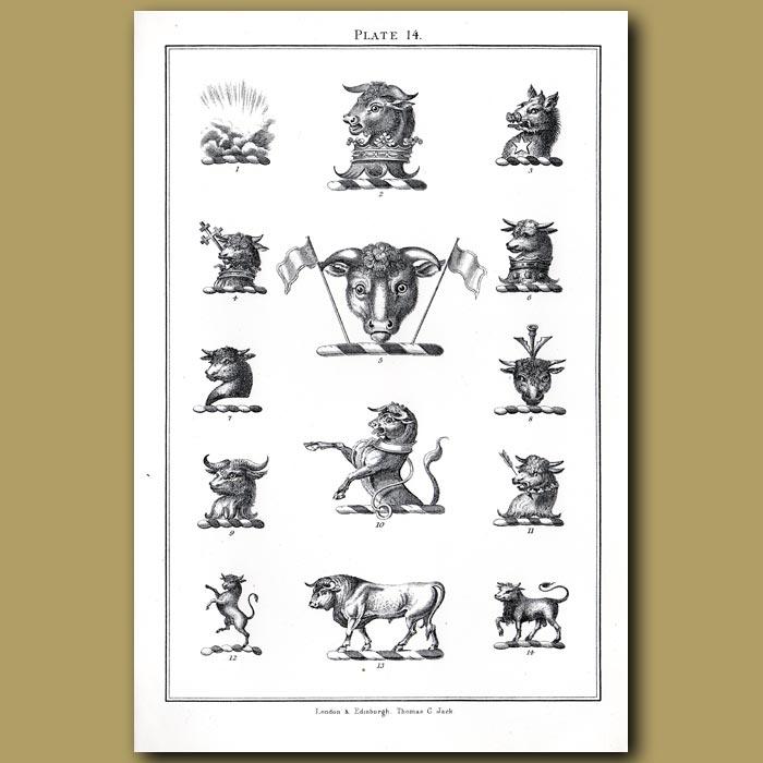 Bull heads: Genuine antique print for sale.