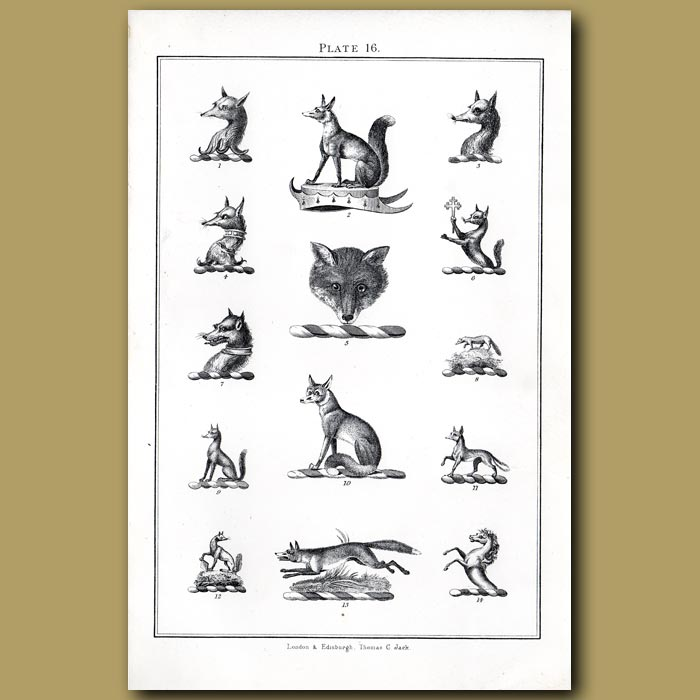 Foxes: Genuine antique print for sale.