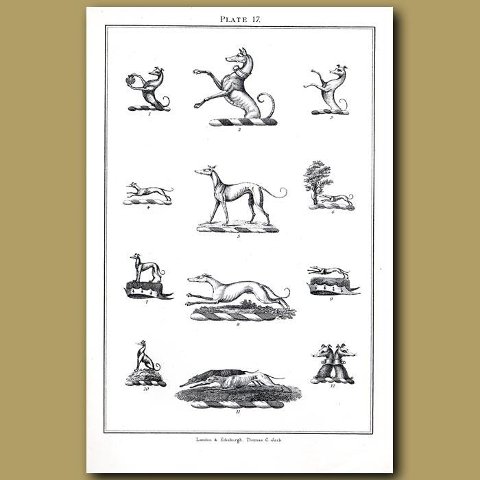 Greyhounds: Genuine antique print for sale.
