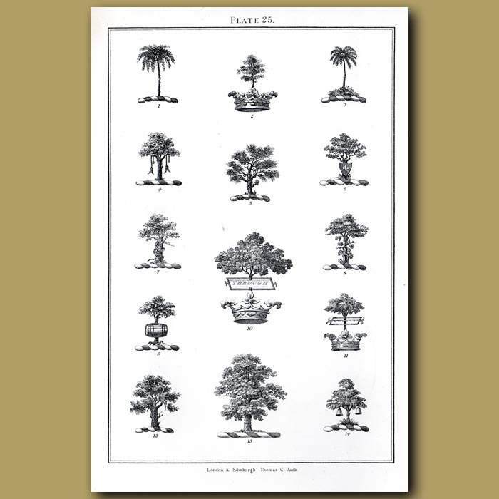 Palm trees, Oak, Yew, Crowns: Genuine antique print for sale.