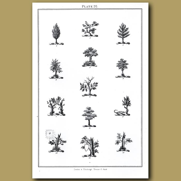 Pine, Holly, Oak trees: Genuine antique print for sale.