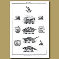 Dragons, Tortoise, Crocodile, Lizard, Crowns