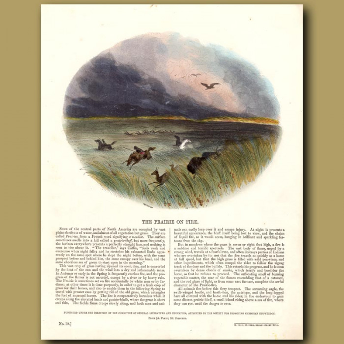 The Prairie on Fire: Genuine antique print for sale.
