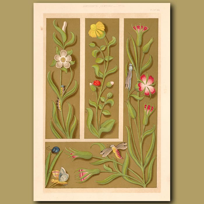 Antique print. Sixteenth Century No.10. Elaborate Borders Wih Insects And Flowers