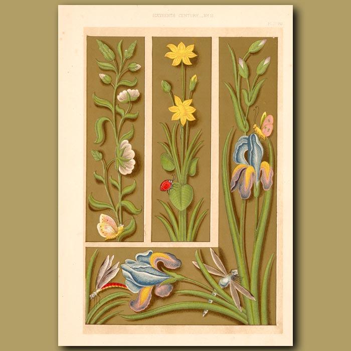 Antique print. Sixteenth Century No.11. Elaborate Borders Wih Ladybirds,Dragonflies And Flowers