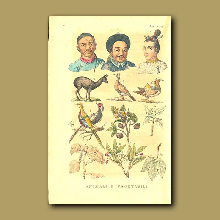 Antique print. People, Animals and Plants in China