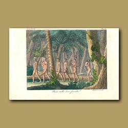 Hunters in the Brazilian jungle - Puri Indians
