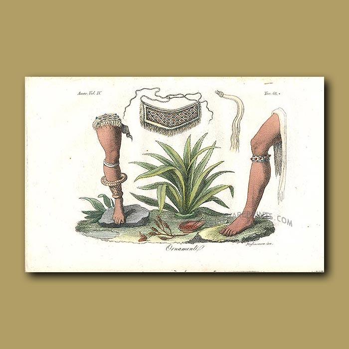 Antique print. Leg Ornaments and bromeliad