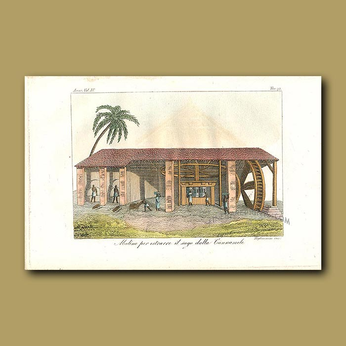 Antique print. Building in which sugar is extracted from sugar canes