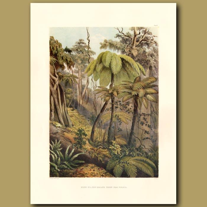 Antique print. Scene In A New Zealand Forest Near Porirua