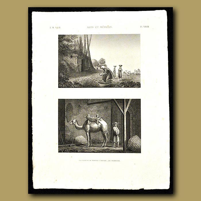 Antique print. Camel Herder
