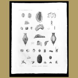 Nudibranch, Sea Hares and Sea Cucumber